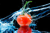 Tomato and splash water — Stock Photo