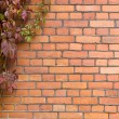 Brick wall covered in ivy — Stock Photo
