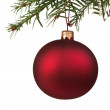 Red Christmas bauble on the tree — Stock Photo