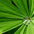 Water drop on green plant - Stock Photo