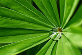 Water drop on green plant — Foto Stock