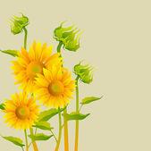 Piękne żółte słoneczniki — Wektor stockowy