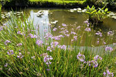 Garden with blue flowers and pond — Stock Photo