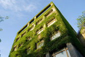 Building covers by real green plants — Stock fotografie