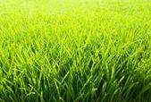 Beautiful and fresh grassland — Stock Photo