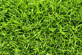 Soft and fresh grass square — Stock Photo