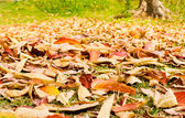 Autumn leaves fallen on grassland — ストック写真