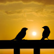 Sparrow small talk under sunset — Stock fotografie