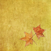 Autumn colorful maple leaf on grungy background — Stock Photo