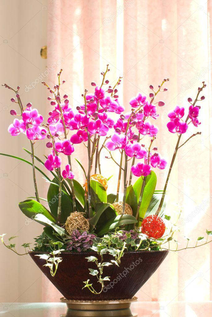 Gruppo di orchidee rosa in un vaso di fiori foto stock for Orchidea prezzo
