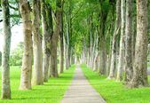 Road through row of trees — Stock Photo