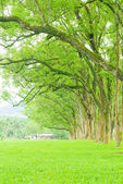 Row of trees and wide grassland — Stock Photo