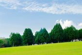 Green grassland, pine trees under blue sky — Stock Photo