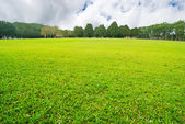 Soft GGreen plain with trees — Stock Photo