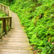 Wooden walkway into the forest — Stock Photo