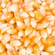 Ingredient of pop corn - Stock Photo