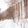 Road and aspen tree covered by snow — Stock Photo