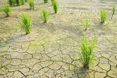 Drought land was cracked. — 图库照片