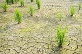 Terre de la sécheresse était fissuré. — Photo