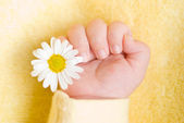 Lovely infant hand with little white daisy — Stock Photo