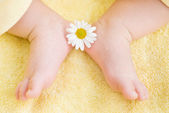 Lovely infant foot with little white daisy — Stock Photo