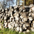 Stock Photo: Wood stack in autumn forest