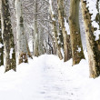 Promenade in winter time — Stock Photo #4572520