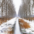 Stock Photo: Creek between two avenues near Szigliget in snowy day, Hungary
