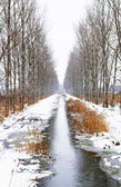 Creek between two avenues near Szigliget in a snowy day, Hungary — Stock Photo