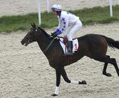 Hästkapplöpning. — Stockfoto