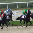 Horse racing. — Stock Photo #3959378