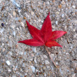 Leaf — Stock Photo #5030734