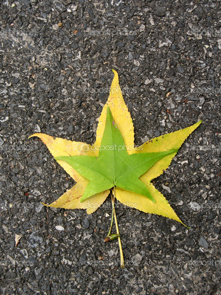 Leaf on asphalt — Stock Photo #5030733