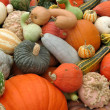 Pumpkins and gourds — Stock Photo #5256467