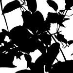 Flower branch silhouette — Stock Vector #4625115