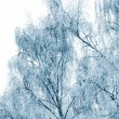 Winter trees covered with snow - Stock Photo
