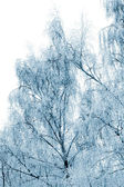 Winter trees covered with snow — Stock Photo