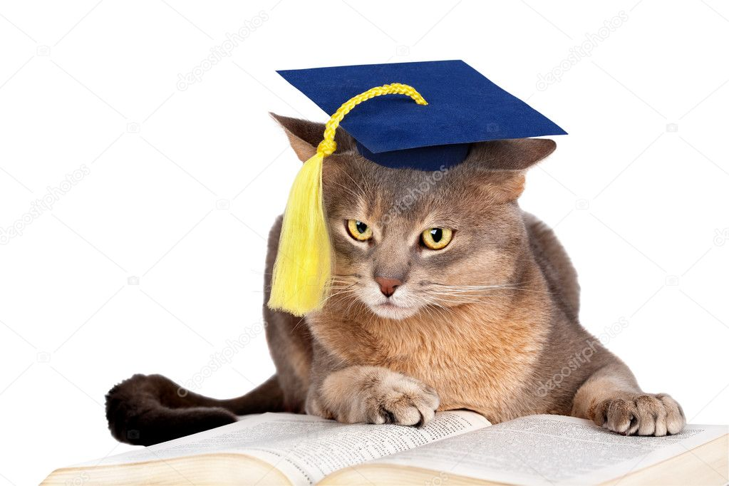Grad  Ou Cat