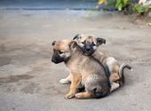 Two homeless puppies — Stock Photo