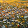 Sunny carpet of autumn leafs. - Stock Photo