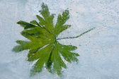 Green frozen leaf — Stock Photo