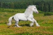 White horse runs gallop on the meadow — Stock Photo