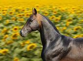 Baía cavalo corre a galope — Fotografia Stock