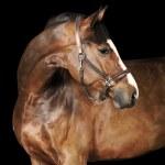 Bay horse in the dark — Stock Photo #4878134