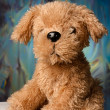 Toy-dog portrait — Stock Photo