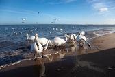Birds at sea — Stock Photo