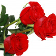 Red roses — Stock Photo #3983153