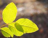 Resumen antecedentes con hojas — Foto de Stock
