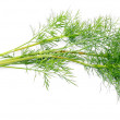 Branch of young dill - Stock Photo