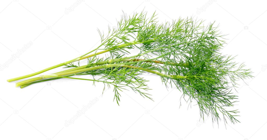 Branch of young dill close up on a white background — Stock Photo #4642647